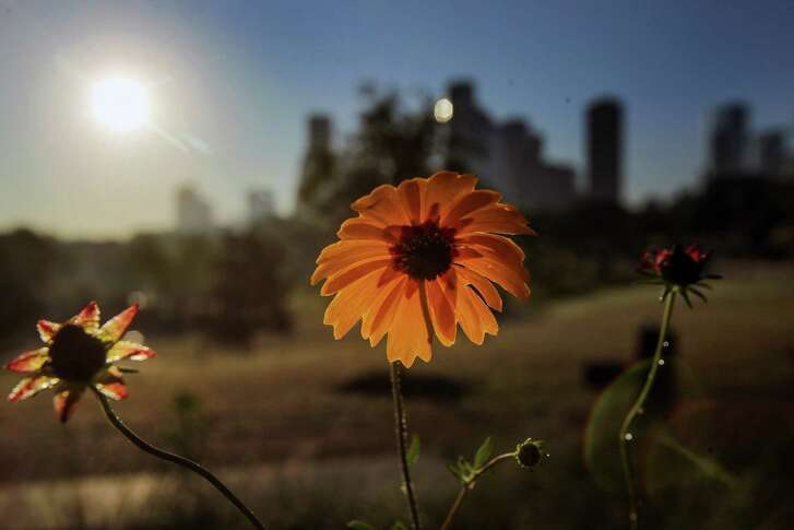 The sun shines bright over the downtown skyline. (Steve Gonzales/Houston Chronicle)
