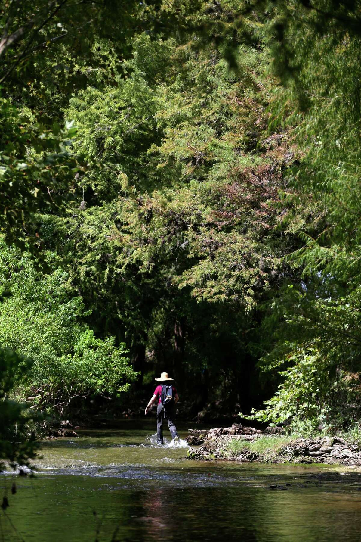 ABOVE: Texas Parks and Wildlife Department Water Resources employee Anne Rogers walks Wednesday, Sept. 14, 2016 up Cibolo Creek on the Cibolo Preserve. Bill Lende, who owned the land and established the preserve located just down stream from the Cibolo Nature Center in Boerne, died Friday.