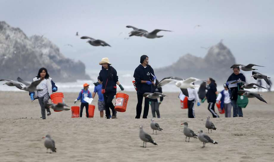 Seagulls stay ahead of volunteers spreading out across Ocean Beach to collect trash for the annual California coastal cleanup in San Francisco. Photo: Paul Chinn, The Chronicle