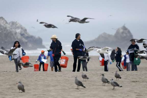 Seagulls move along while volunteers spread out across Ocean Beach to collect trash for the annual California coastal cleanup in San Francisco, Calif. on Saturday, Sept. 17, 2016.