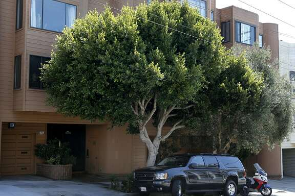 A mature ficus tree grows in front Randy Gzebb's home on Fillmore Street in San Francisco, Calif. on Saturday, Sept. 17, 2016. Gzebb and his neighbors have been forced to pay to repair sidewalk damage caused by the root system. But responsibility for sidewalk repair and tree maintenance would become the city's if Prop. E passes in Novemenber.