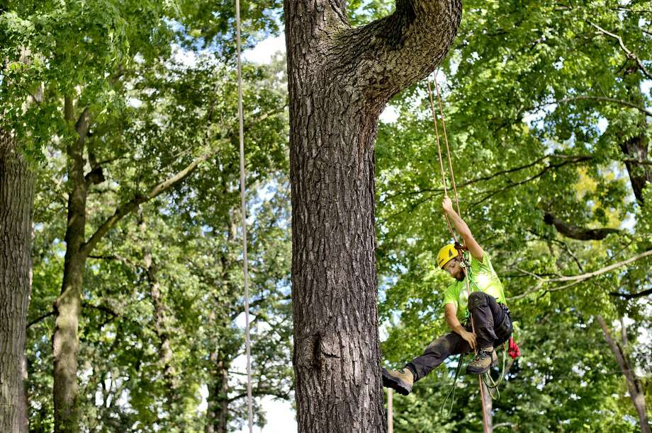 Guardian Tree Experts' Scott Van Sice, of Ann Arbor, climbs a tree during his run in the ariel rescue event as part of the Michigan Tree Climbing Championship on Saturday at Revere Park. Participants competed in five different timed and scored events related to the working conditions of arborists. The Arboriculture Society of Michigan hosted the event. Photo: NICK KING ,  Nking@mdn.net
