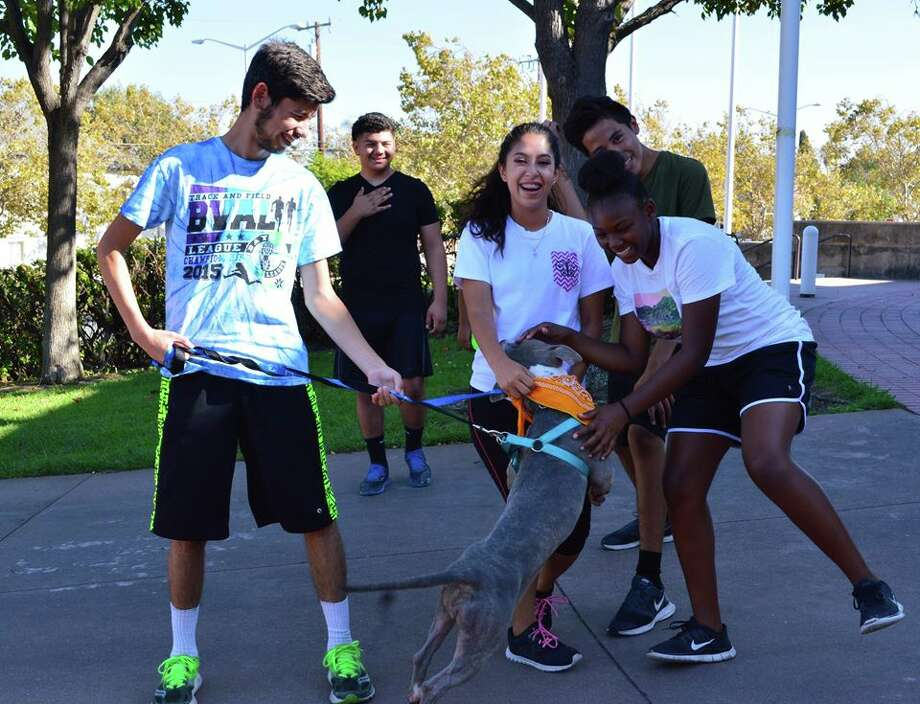 Antioch High School cross-country team runs with the dogs from the Antioch Animal Services to increase shelter adoptions. Photo: Trine Gallegos/Antioch High School