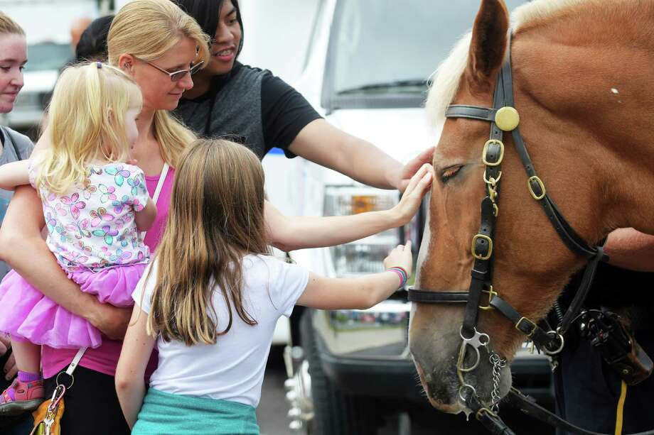 Shea, a 16 year old Belgian draft horse with the Albany Mounted Police, enjoys the petting by visitors at the Upper Madison Street Fair on Sunday, Sept. 18, 2016, in Albany, N.Y.  This is the sixth year of the street fair, which is organized by the Upper Madison Improvement Group and co-sponsored by the Steamer No.10 Theater.  Money raised from the event is used for beautification projects and for promoting the neighborhood.  The theme of the fair is city living at its best.    (Paul Buckowski / Times Union) Photo: PAUL BUCKOWSKI / 40038053A