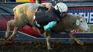 A young boy participates in the Mutton Bustin' competition during the Washington State Fair in Puyallup, Sunday, Sept. 18, 2016.