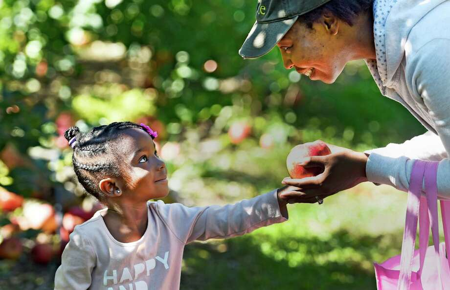 Kamaria Campbell, 3, of Albany, hands her mother Ebi Campbell an apple Monday afternoon, Oct. 12, 2015, at Bowman Orchards in Rexford, N.Y. (Skip Dickstein/Times Union) Photo: SKIP DICKSTEIN / 10033728A