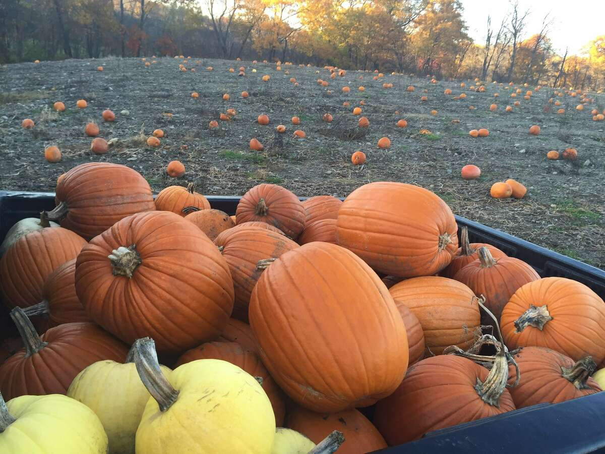 You can get pumpkins at many of the places already mentioned, but another option is Engelke Farm in Troy. The farm also has a corn maze, hayrides and all the other requisite fall farm favorites, but what makes it stand out is ?- a zipline! Just be sure to make a reservation because it's such a popular fall attraction. (Engelke Farm) ORG XMIT: KpLkgXAcD3KiFBscn4Bd