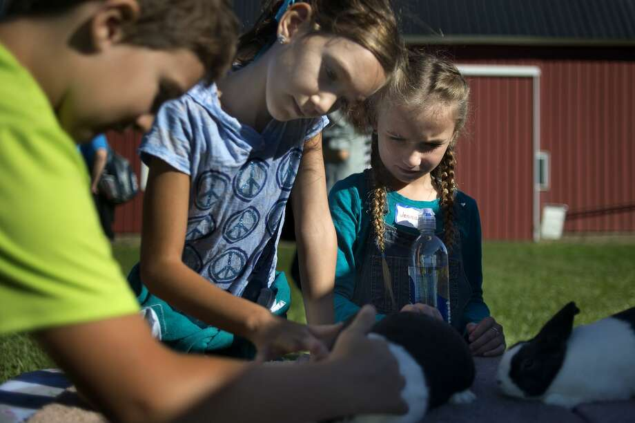 Pine River Elementary fourth-graders from left: Brayden Albee, Madilynn Dietlein and Jenna Nelson pet Dutch rabbits during the 29th annual farm tour at Laurenz Farm Tuesday morning. Approximately 700 hundred fourth-graders from Midland County visited the farm to learn about farm machinery, growing crops and taking care of animals. Photo: Brittney Lohmiller/Midland Daily News