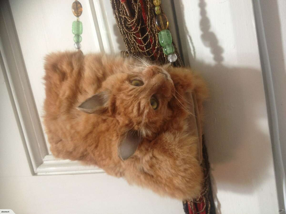 """Listed as a """"one off glamour puss purse"""" taxidermist Claire Hobbs is selling the pelt and head of a cat in purse form on Trade Me, an internet-auction website in New Zealand. The auction closes Sept. 21, 2016 at 8:30 p.m. and the bag is currently going for $1,400."""