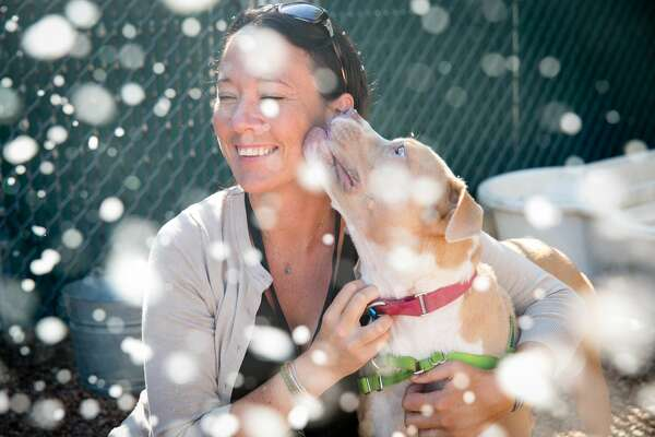 """The Austin Animal Center threw a """"snow party"""" in honor of Spunky, a terminally ill dog who loved to play in the cold winters of Wisconsin before moving to Austin. Sept. 16, 2016."""