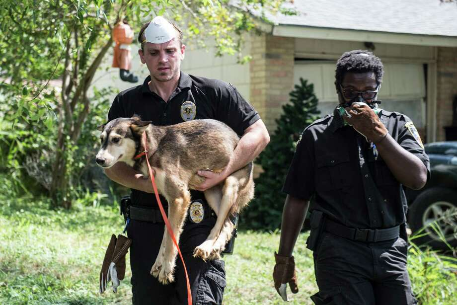 San Antonio investigators remove animals from a home on the Southwest Side Wednesday morning, September 21, 2016. Photo: Matthew Busch, For The San Antonio Express News / © Matthew Busch 2016