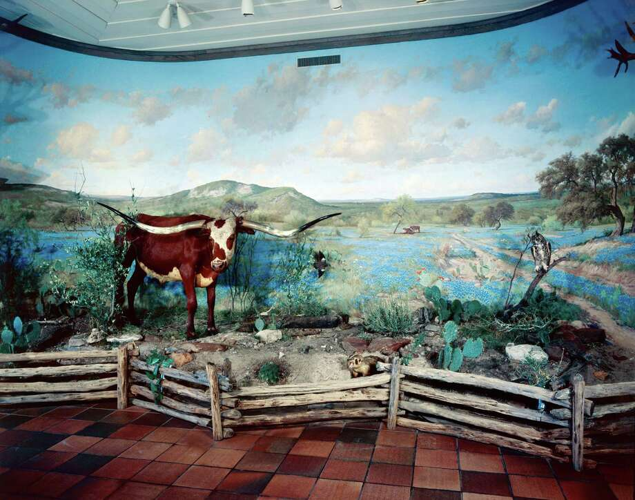 "Porfirio Salinas' ""Spring Scene of Texas Hill Country"" originally served as a backdrop for a diorama of stuffed longhorns at the Buckhorn Saloon & Museum at the Lone Star Brewery, where countless visitors walked past it over the course of four decades. Photo: /Courtesy UTSA Special Collections"