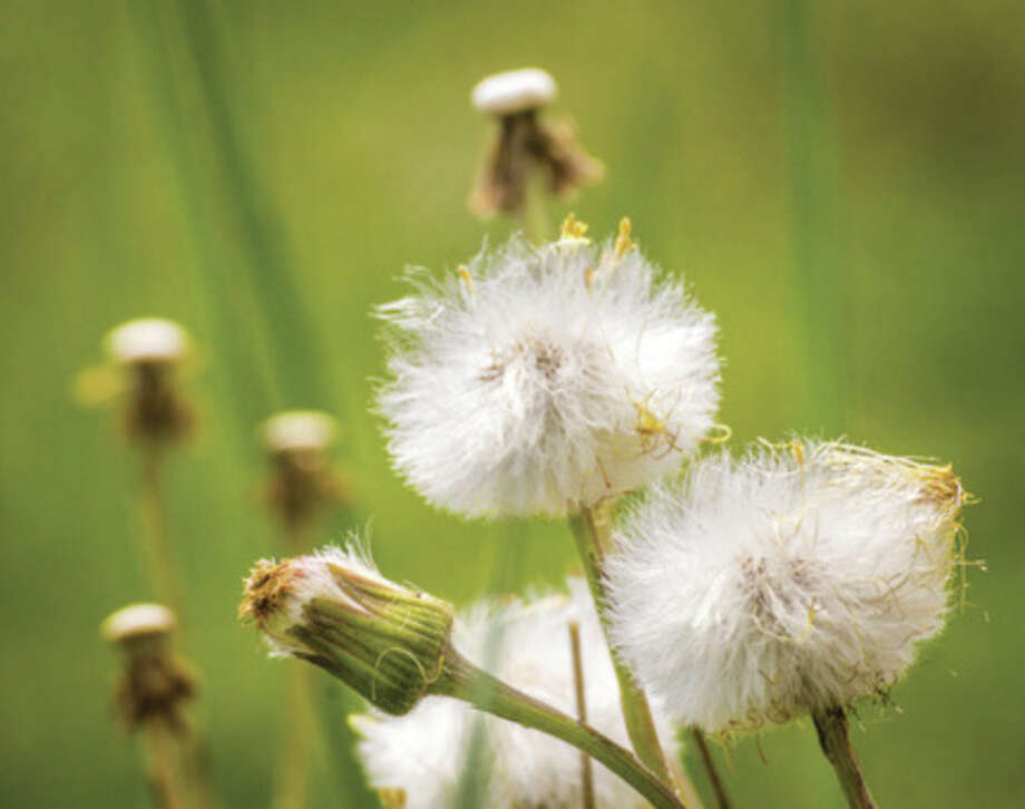 Metro Services  September and October are the best months to control perennial broadleaf weeds, including dandelions and clover.