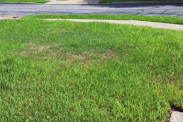How to control weeds in your summer lawn and garden