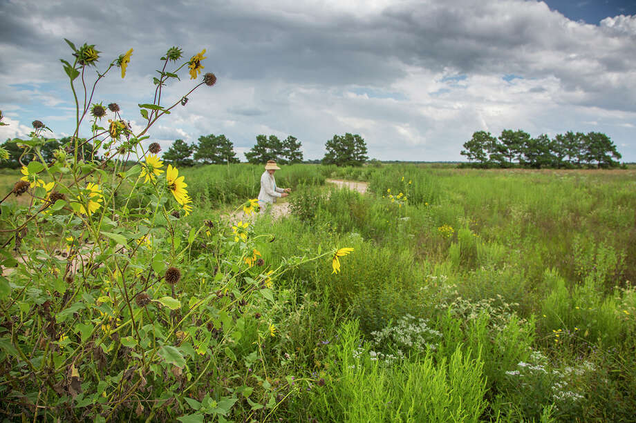 Naturalist, scientist, photographers, and volunteers will comb the Indian Grass Preserve on the Katy Prairie conducting a Bioblitz on October 1, 2016.  Photo Credit:  Kathy Adams Clark.  Restricted use. Photo: Kathy Adams Clark / Kathy Adams Clark/KAC Productions
