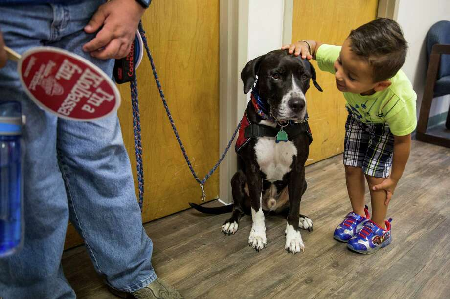 Safeer Rosales, 4, pets Anthony Pottebaum's service dog Tucker during an open house for the PTSD Foundation of America's Veteran's Center San Antonio on July 9 at the Warm Springs Rehabilitation Hospital in San Antonio. Photo: Carolyn Van Houten /San Antonio Express-News / 2016 San Antonio Express-News
