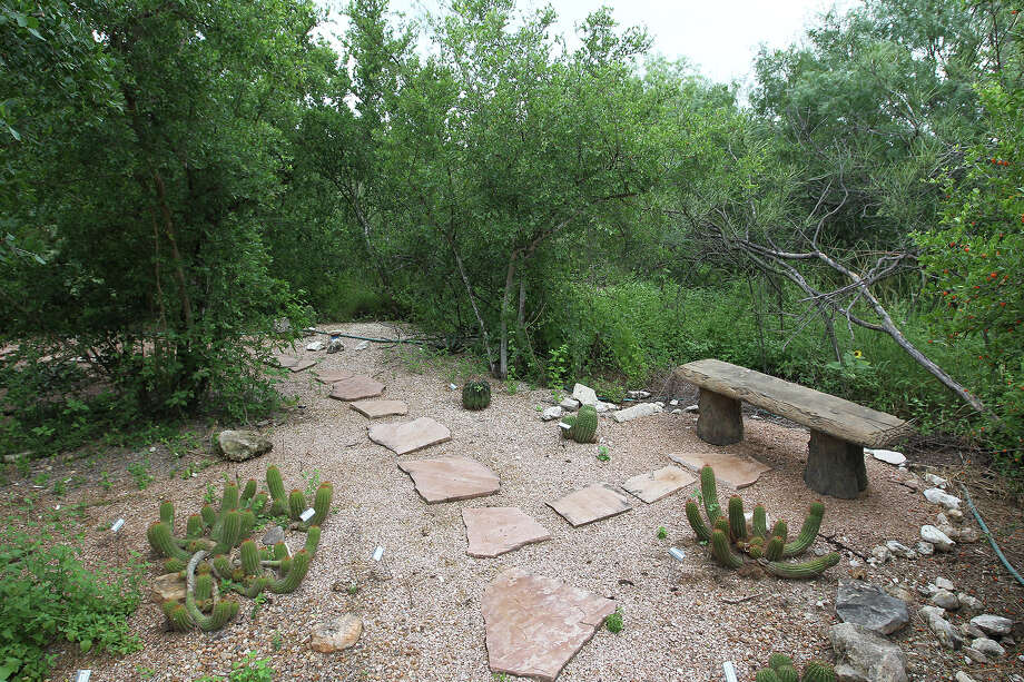 A bench provides visitors a chance to enjoy the cactus garden at the Mitchell Lake Audubon Center in 2014. The center incorporated mostly native plants and grasses for its landscaping. Photo: Jerry Lara /San Antonio Express-News / © 2014 San Antonio Express-News