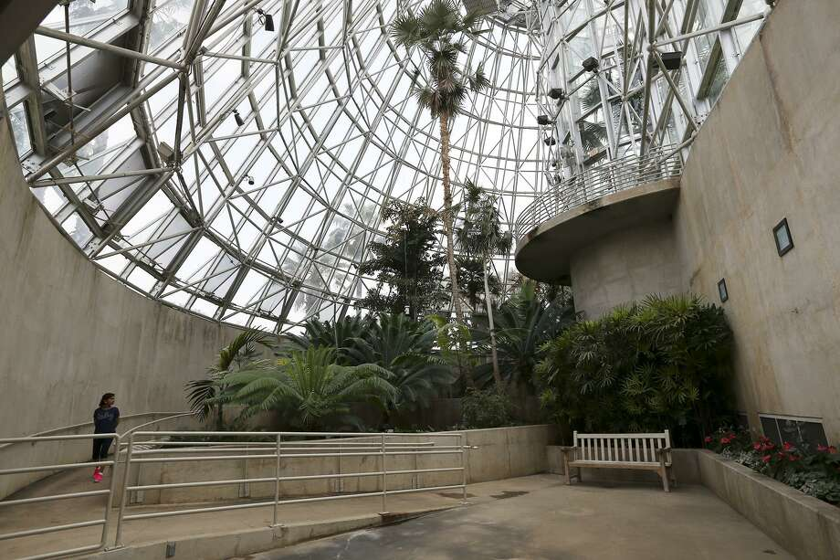 A guest walks inside the Palm and Cycad Pavilion that is part of the Lucile Halsell Conservatory at the San Antonio Botanical Garden. Photo: Jerry Lara /San Antonio Express-News / © 2015 San Antonio Express-News