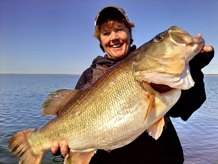 "Each year, the Texas Parks and Wildlife Department holds the ""Toyota ShareLunker Program,"" a contest that encourages anglers to lend their 13-pound-plus largemouth bass for the purpose of breeding healthy and large fish at a hatchery. Entries for the 31st season are accepted Oct. 1, 2016, through April 30, 2017. Photo: © Photo Courtesy Debbie Baker"