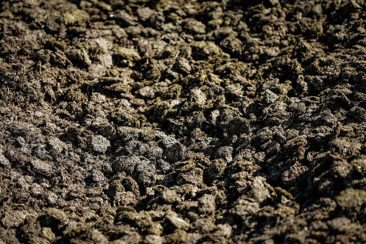 Manure is seen after being separated by a DTX separator at Point Reyes Farmstead Cheese Company, in Marin, California, on Thursday, Sept. 22, 2016.