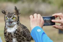 The Great Horned Owl is among the birds that have been spotted at the Mitchell Lake Audubon Center.