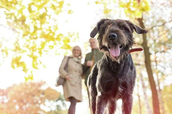 Retired couple. Senior. Dog. Park. Retirement. Fall. Autumn.