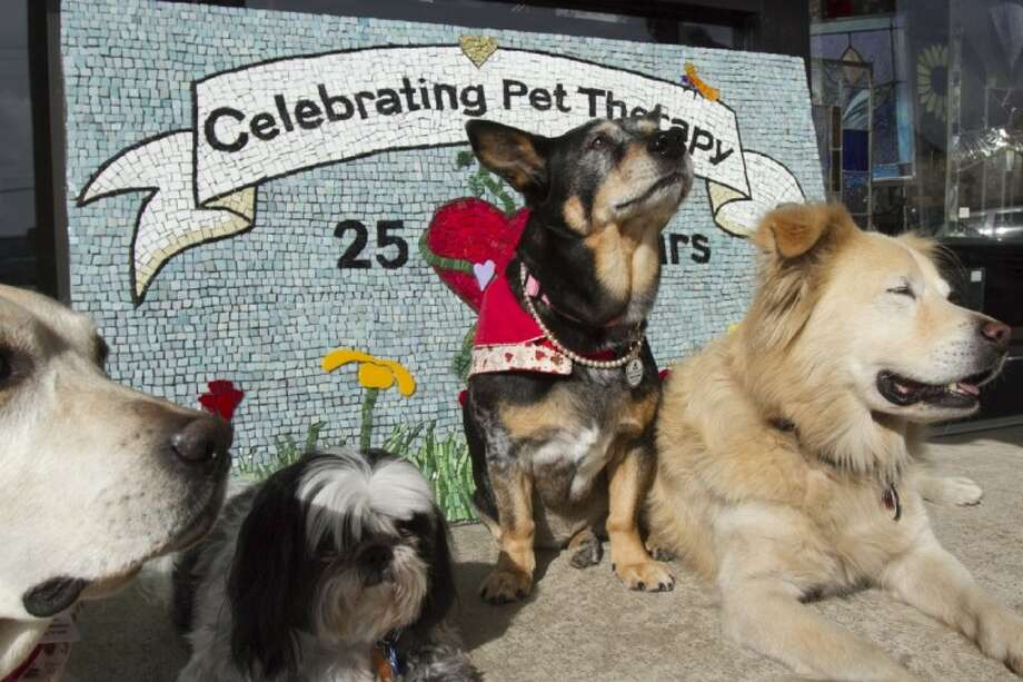 In this photo taken Nov. 7, 2012, service dogs from the Dog Therapy Program at Dell's Children's Hospital in Austin pose in front of a mosaic panel. The mosaics celebrate 25 years of pet therapy at the hospital. Photo: Guillermo Hernandez Martinez