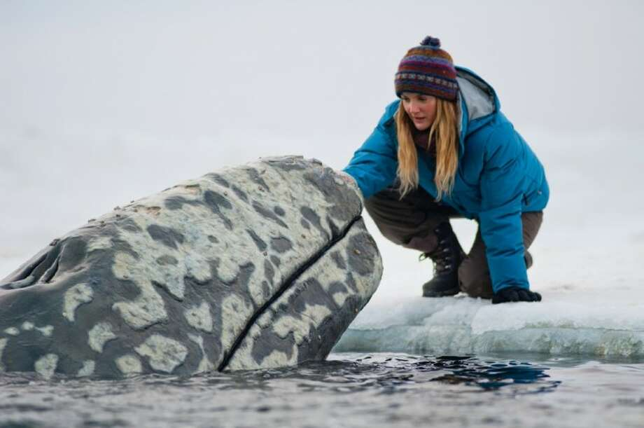"""In this image released by Universal Pictures, Drew Barrymore is shown in a scene from """"Big Miracle,"""" a film about the rescue of a family of gray whales trapped by rapidly forming ice in the Arctic Circle. The film, which stars Barrymore and Ted Danson opens today. Photo: Darren Michaels"""