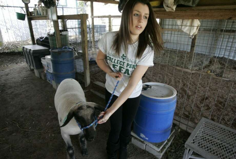 """The Woodlands College Park High School senior Mary Voelkel leads her 8-month-old lamb """"Blaze"""" during an after-school visit to the agriculture barn. Voelkel is the president of the College Park FFA program."""