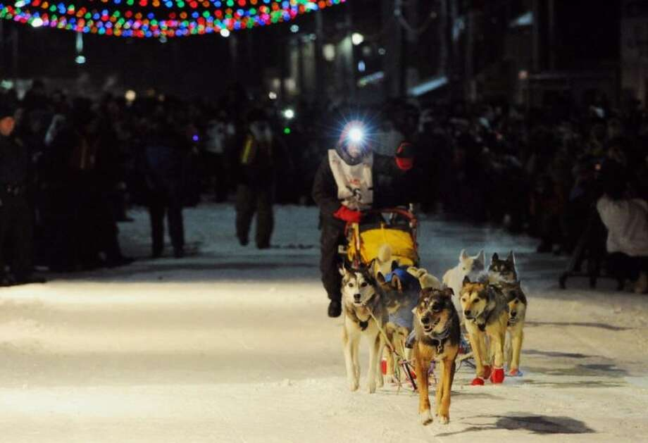 Lead dog Tanner brings Mitch Seavey's team into the finish chute and under the burled arch in Nome on Tuesday evening. Photo: Bill Roth