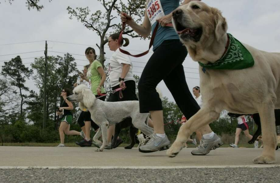 Dogs and their owners hit the road for the 5K-9 race during Saturday's Muddy Trails event at Rob Fleming Park in The Woodlands.