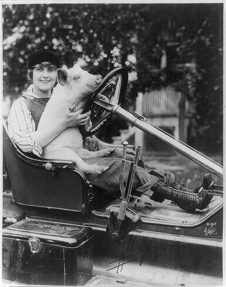Pearl White, 1889-1938, seated behind steering wheel of an auto, with a pig on her lap, facing slightly right; 1916 Aug. 31. (# LC-USZ62-57953). Photo: Library Of Congress Digital Archives