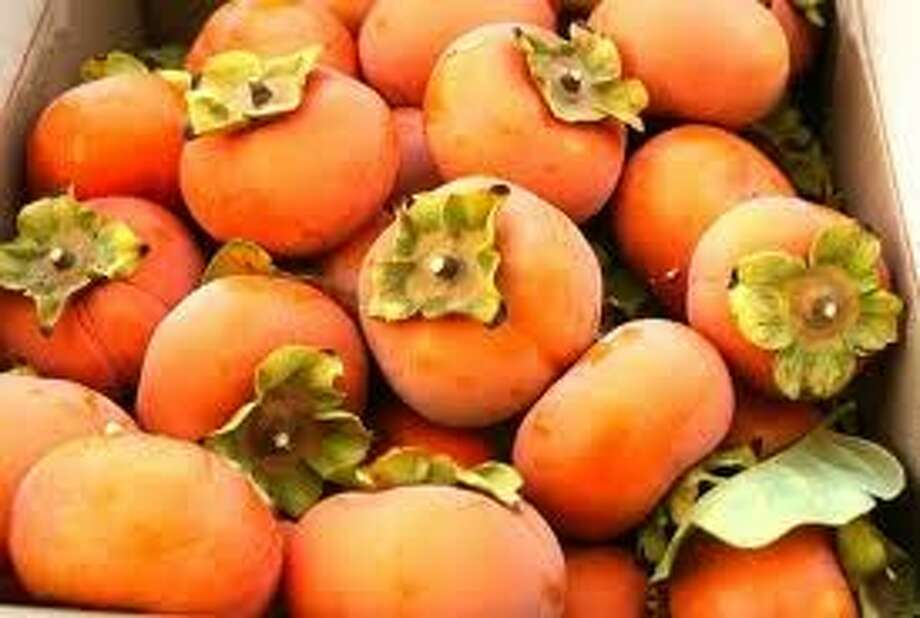 Fruits picked from Izu persimmon tree.