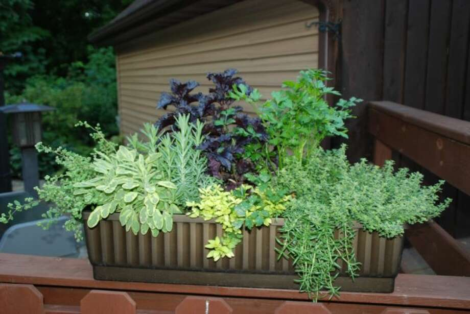 There are a number of creative ways, such as patio container gardens, to spruce up the landscape.
