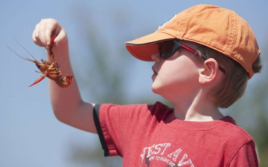 Finnigan Cridland looks at a cooked crawfish during the Woodlands CrawPHish Festival in Town Green Park on Saturday. Photo: Karl Anderson