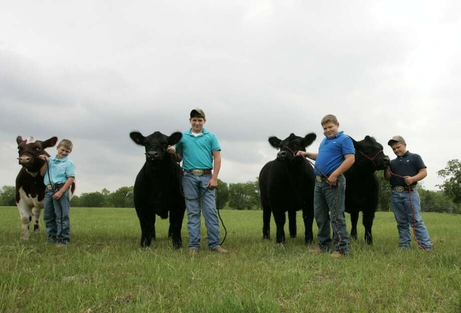 From left, brothers Garrett, 9, Cody, 12, Tanner, 11, and Dylan Marsh, 8, stand for a photo with their steers at their home in Willis. All four boys placed in the 2011 Montgomery County Market Steer Show and made the 2011 Montgomery County Junior Livestock Auction Wednesday night.
