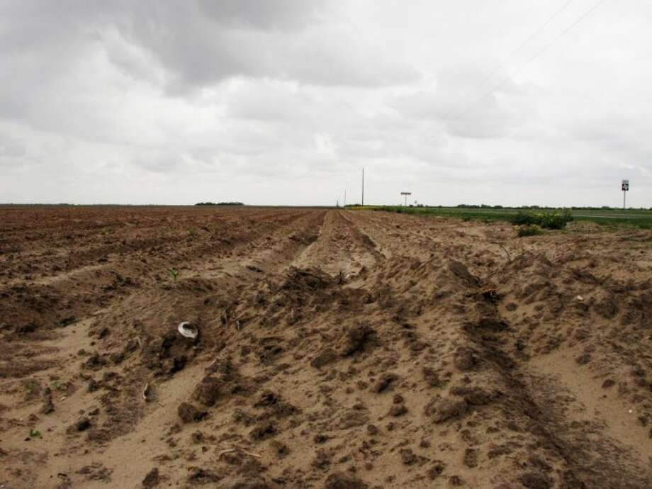 This May 14 photo shows a field where a crop failed to emerge in Lyford. Farmers in South Texas are struggling with uneven crops and some that never emerged as the Rio Grande Valley suffers through its driest stretch ever recorded. Photo: Christopher Sherman