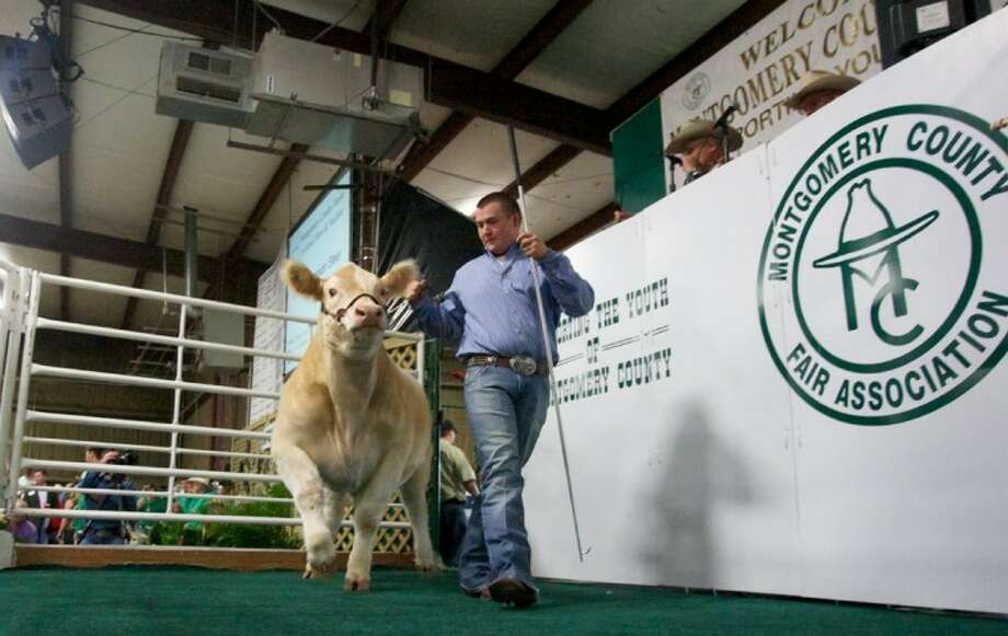 "Matthew Duval of The Woodlands shows off his Grand Champion steer ""Lucky"" during the 2012 Montgomery County Fair Jr. Livestock Auction April 18 at the Montgomery County Fairgrounds in Conroe."
