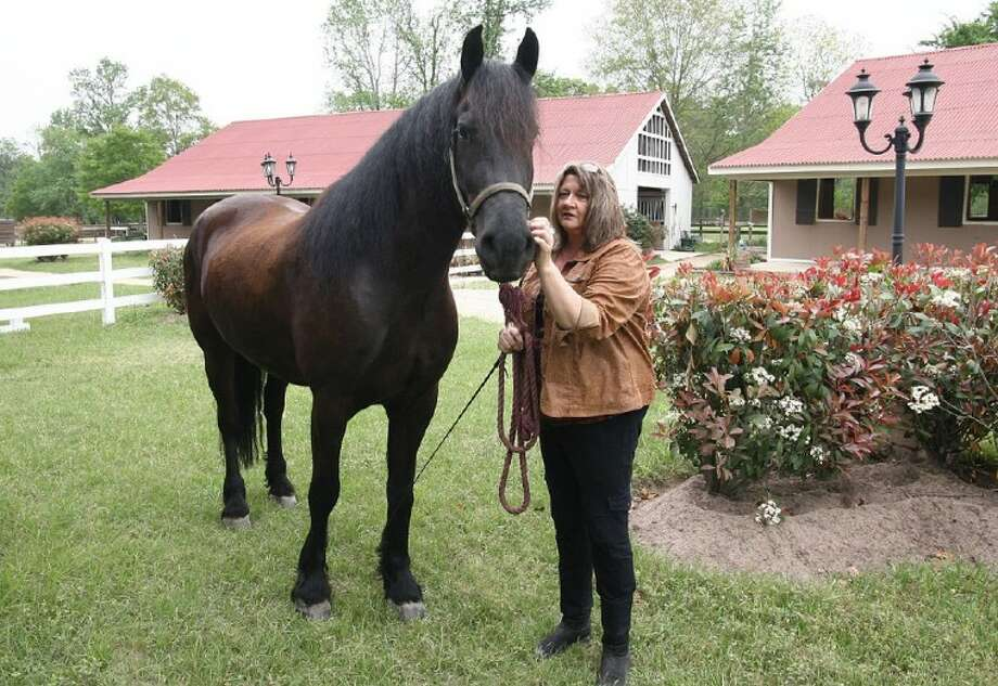 Connie Rice, owner of Stonehaven Equestrian, grooms Brio, a 5-year-old Friesen that will be featured in the dressage exhibition during the Montgomery County Homeless Coalition's 2011 Kentucky Derby Gala on Saturday.