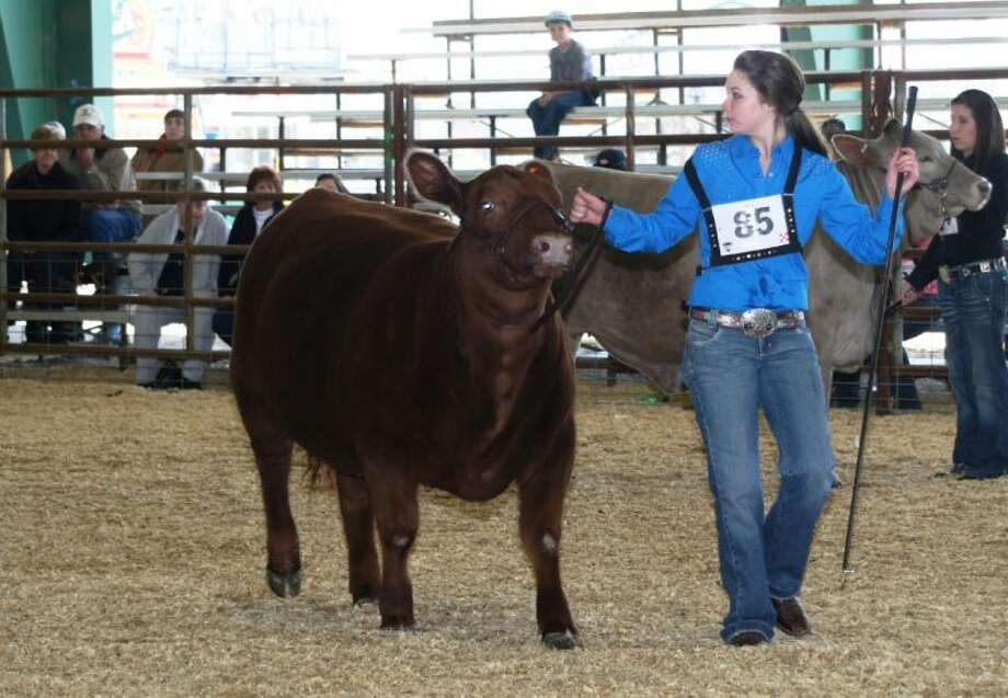 Morgan Aragon, a student at Caney Creek High School, shows her Grand Champion replacement heifer at Wednesday night's auction.