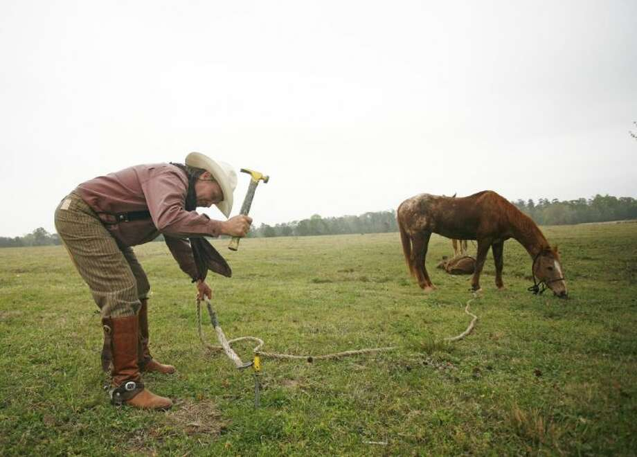 Ronni Faulk, of New Waverly, lets his horses graze after taking part in Saturday's Montgomery County Fair and Rodeo Trail Ride at the Sam Houston National Forest in Huntsville. Faulk has been taking part in the trail ride for at least 10 years. Photo: Staff Photo By Eric Swist