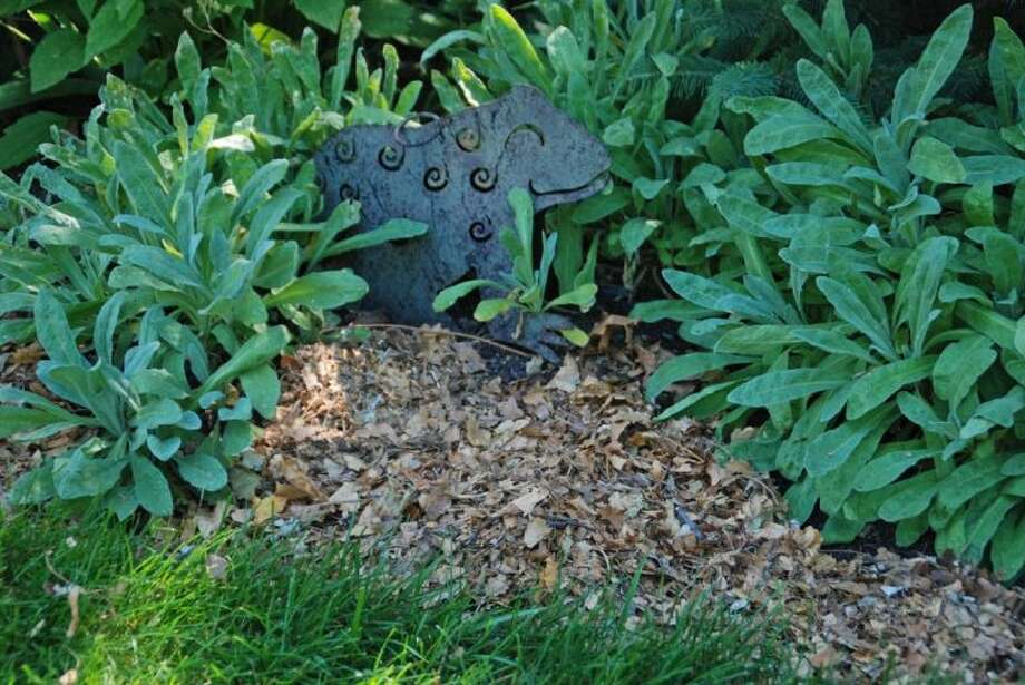 Mulch with shredded leaves, evergreen needles, woodchips or other organic matter to conserve moisture, reduce weeds and improve the soil as they decompose.