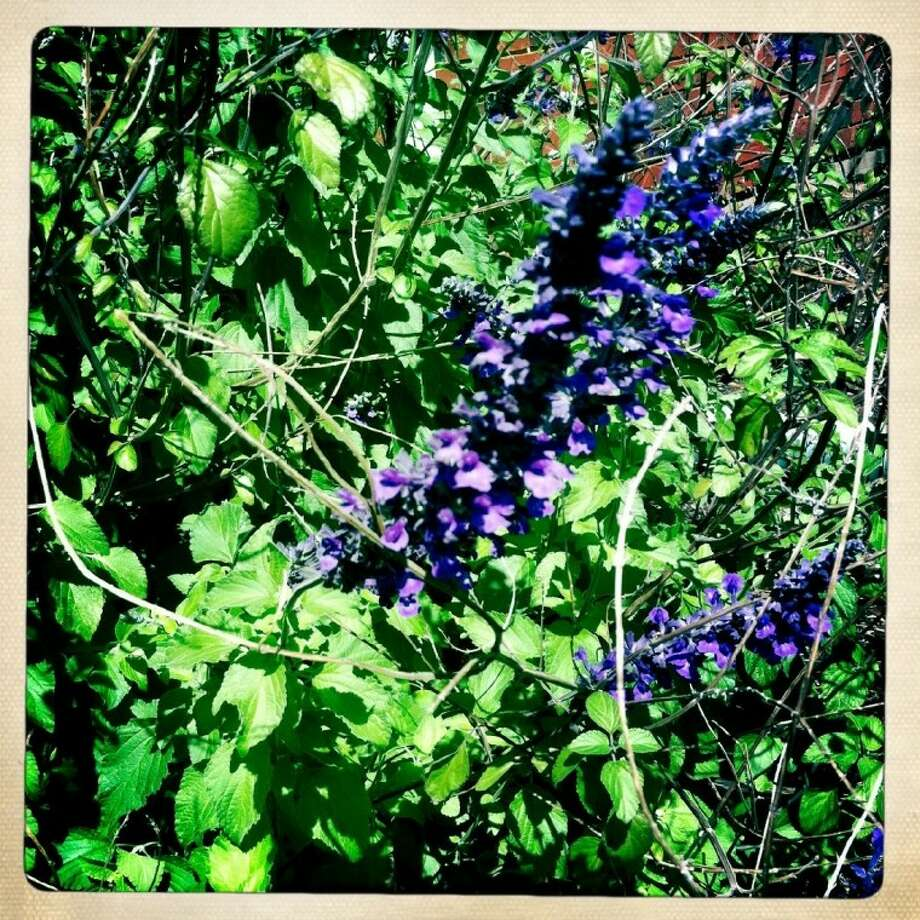 Indigo Spires salvia is a good option if you're looking for low maintenance summer color.