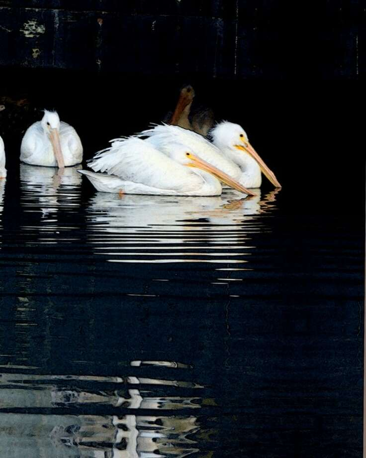 """Vickie Nash's """"Pelicans II"""" won an honorable mention at the May 18-19 Lone Star Art Guild regional show."""