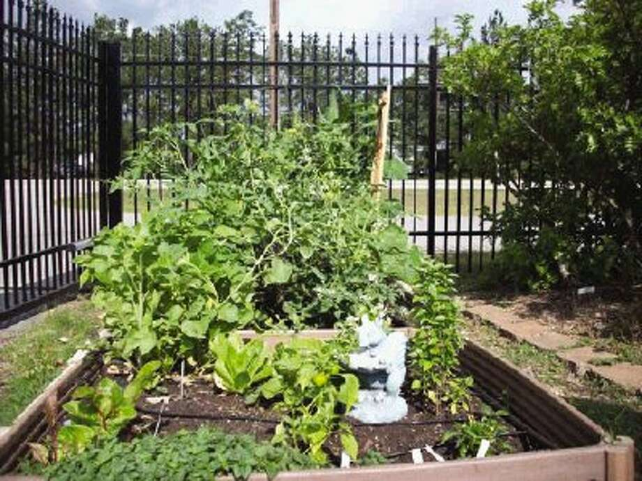 """If you would like to have a small garden, but don't want to till, or dig, consider starting a """"Square Foot Garden."""""""