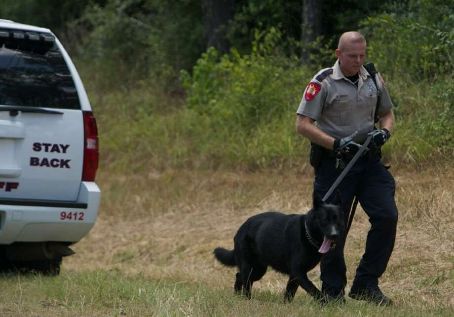 A Montgomery County Sheriff's Deputy walks a police dog near the scene of a manhunt Friday on FM 2854 in Conroe in search of two men possibly involved in a burglary. Photo: Staff Photo By Eric Swist