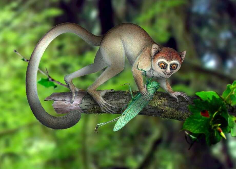 This undated handout artist rendering provided by Xijun Ni, Institute of Vertebrate Paleontology and Paleoanthropology, Chinese Academy of Sciences shows a reconstruction of Archicebus achilles in its natural habitat of trees. One of our earliest primate relatives was a hyperactive wide-eyed creature so small you could fit a few of them in your hand, if they would just stay still long enough, new fossil evidence shows. Photo: Xijun Ni