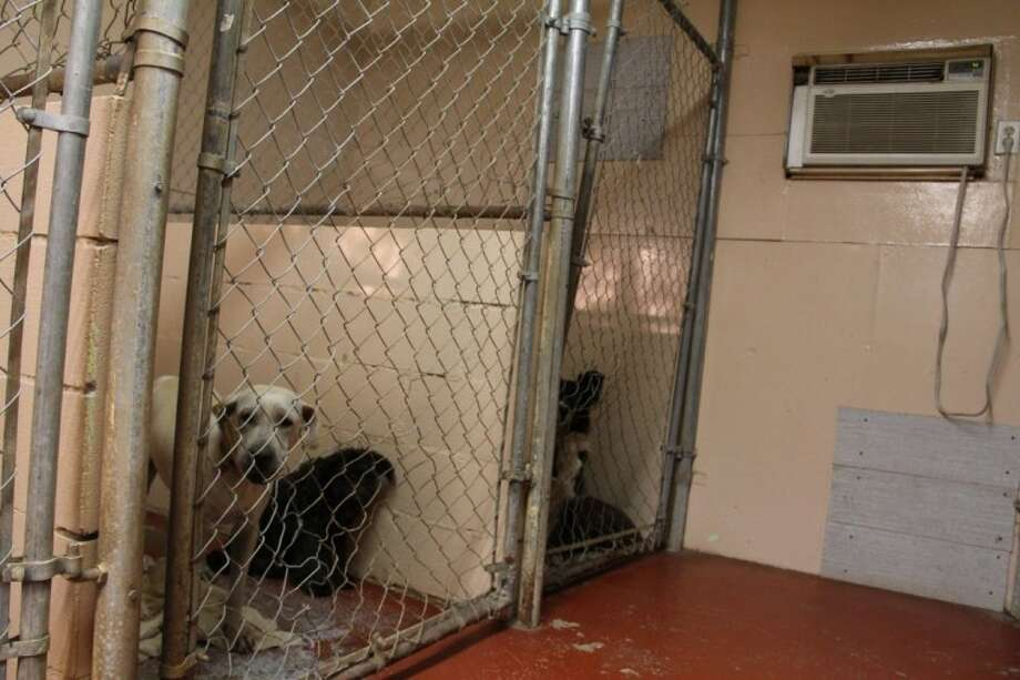 Two English Bulldogs died while under the care of Precious Pets Kennel near the Woodlands. The dogs' owners believe the kennel owner is negligent due to extended exposure to outdoor heat. The kennel owner said they were found on their side having difficulty breathing inside the kennel's air-conditioned room. She said she does not know what caused their deaths.