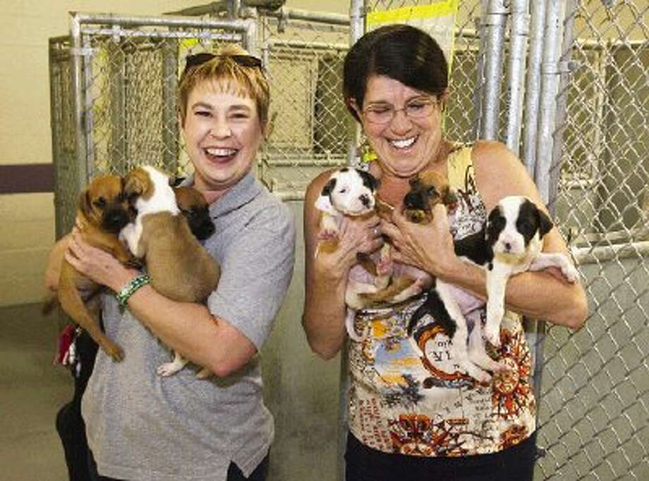 Deanna Sellens, executive director of Texas Litter Control, left, and Jan Holman, kennel supervisor with MCAS, hold six 8-week-old pit bull mix puppies available for adoption at the county shelter.