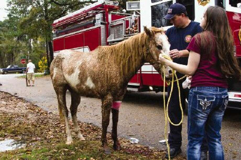 Phillip Johnson and Mykayla Mullins hold an injured horse after the Conroe Fire Department responded Saturday afternoon to an incident involving the horse being attacked by two pit bulls on a residential street off FM 1314 near Gladiola Avenue in Conroe. Neighbors walked around with sticks as a precaution after the violent dogs attack. Photo: Staff Photo By Ana Ramirez / The Conroe Courier